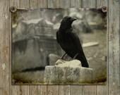 Dark Art Crow, Blackbird, Raven In Graveyard, Gothic Bird photograph, Aged Style, Eerie, Old Graveyard - Gothic Crow At Home