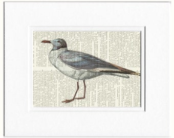 sea gull, grey capped gull print
