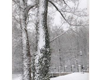 Winter Trees near the MUNY, Forest Park