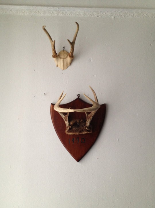 Wall Mounted Antlers Wall Mounted Hanging Taxidermy By