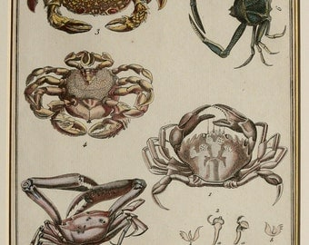 1780 Antique print of CRABS, CRUSTACEANS. Sea Life. Marine Animals. 235 years old engraving