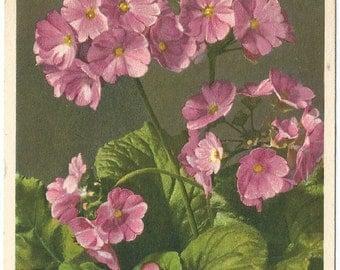 Vintage Used Botanical Postcard, Becher - Schlusselblume Flowers  -  Thor E. Gyger, Adelboden, Switzerland #1167