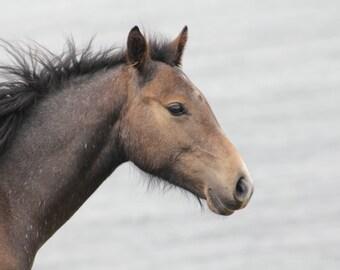Mdash Photography - Horse