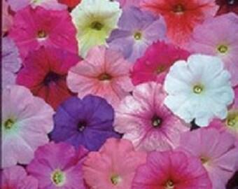 Petunia Seeds & Plants - Multi Flowered, Vivid Color ...