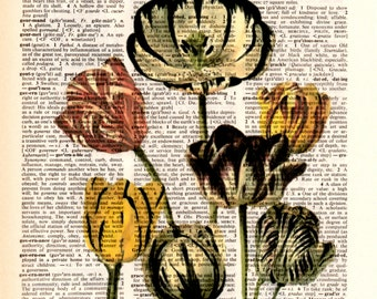 "Dictionary art print,vintage posters,gifts ideas,Digital illustration drawing,home & living,Home decor,more,still life""Poppies and anemones"""