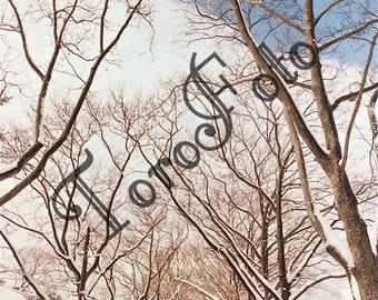 Snow Fall - Bellerose, NY : 2008