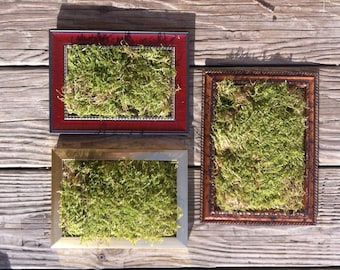 Framed Moss Set of 3