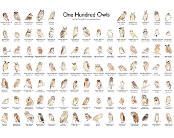 Owl Illustration, Owl Species Poster, Art Print, A2 Giclee Print of 100 Owls