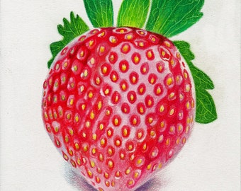 Strawberry colored pencil drawing on paper