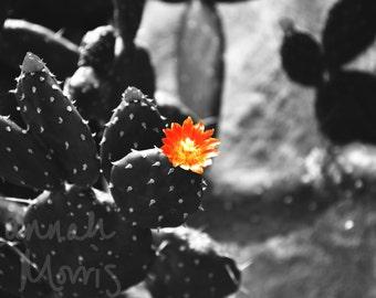 Black and White Cactus photograph print Kew Gardens 8x6