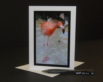 Flamingo Photo Note Card, Flamingo Photograph, Flamingo Card, Blank Flamingo Card