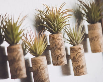 Air Plant Magnet {Artificial}
