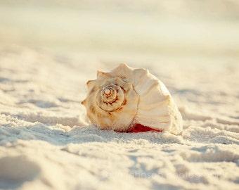 seashell photography, beach photograph, white home decor, nature wall art, beach cottage art, spiral, whelk