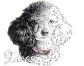 Poodle Art Digital Stamp Download | Dog DigiStamp | Scrapbooking Clipart | Paper Crafts | Dog Portrait | Dog Art Digi Stamp