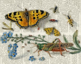 insects,1650's dictionary page print