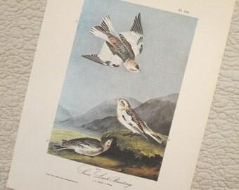 Vintage Bird Illustration - Snow Lark - Audubon Book Plate