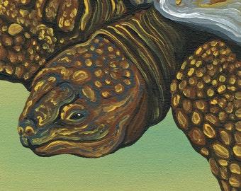 OOAK Original Canvas Magnet Tortoise Wildlife Art-Carla Smale