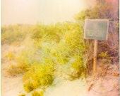 Trespass - Faded Yellow Green Beach Foliage and Pink Mauve Beach Scene - Expired Polaroid Photo Print with Purple Stripe Flaw