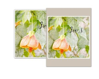 Paris Flowers 8 x 8 print,  JPEG file instant download