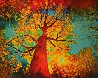 Night sky, autumn,16x20, art, photography, nature, Fantasy landscape, #tree art #limited edition #Art #Original art #trees #Fall wall art