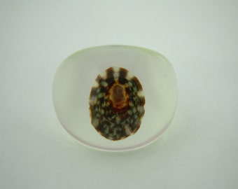 Seashell from the Sound Shore Limpet Size 6