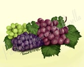 GRAPES Instant Download Original Digital Painting, Kitchen or Dining Room Art 8x6
