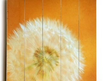 Ready to hang wood panel - Orange Decor, Still Life photography, wooden sign wall hanging wall decor nursery art wood panel, Dandelion decor