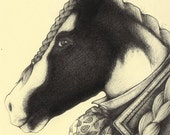 Bespoke Victorian Pet Portraits, Original drawings by Andrea Joseph