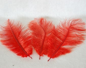 Ostrich's feather - red