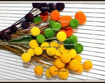 60 Craspedia long stems Dried & dyed- Light or Dark Green-Billy Balls-Billy Buttons-Orange-Purple-Aspen Gold