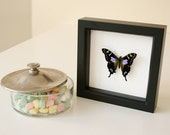 Framed Butterfly Gift For Her Insect Wall Art