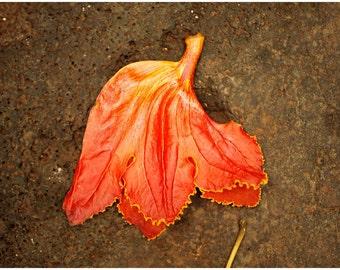 Hawaiian Fine Art Canvas wrap -Red Hibiscus
