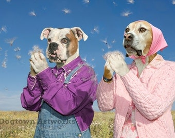 Blowin' in the Wind, original large photograph of Boxer dog couple wearing clothes and blowing common milkweed seeds