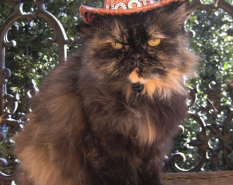 midnight cowboy cat hat and wild side collar
