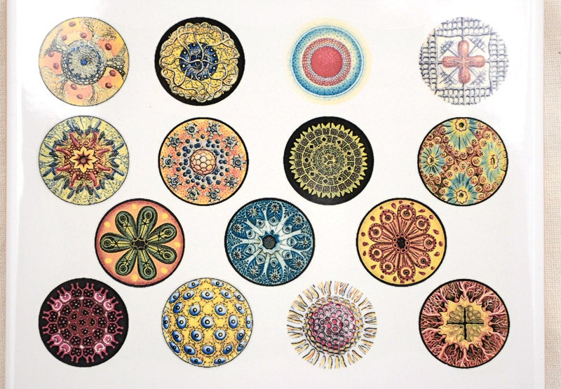 Colorful Circles Ceramic Decals Glass Fusing Decals