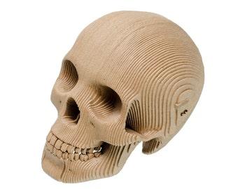 Micro Vince - Cardboard Human Skull - Brown