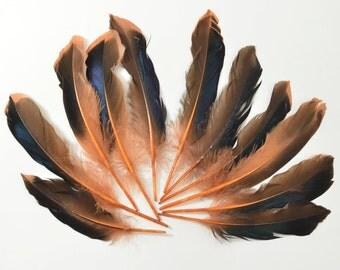 Mallard Feathers, Iridescent Green Wing - Orange/Rust (10pcs) : M16