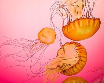Photograph of Jellyfish - orange, pink, nature art print, sea creature, color photography, natural history, girls room, ocean, wall art