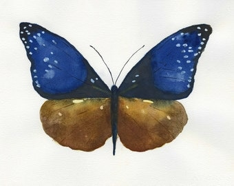 Blue Striped Crow butterfly.