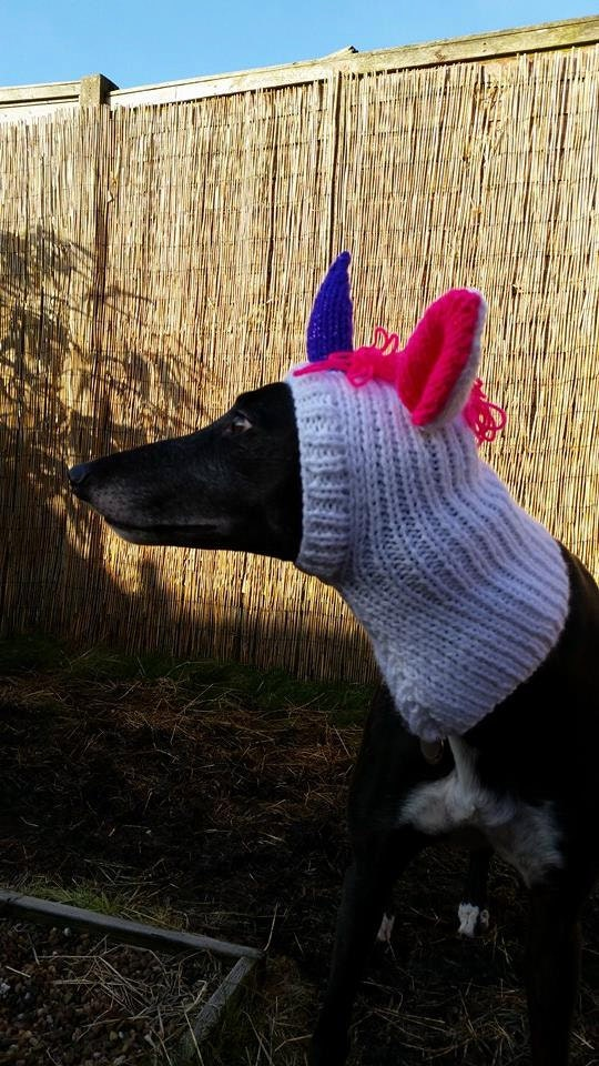 Free Knitting Pattern For Greyhound Jumper : Greyhound Fancy Dress Unicorn Hat Knitting Pattern Free UK
