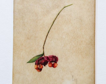 Original Botanical Watercolor on Vellum of Hearts-a-bustin