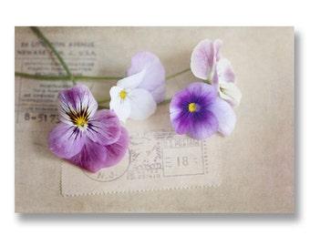 Pansy Photograph, Purple Pansies, Vintage Style Flower Print, Purple Spring Flowers, Purple Pansy Print, Cottage Chic Floral Decor, 8x12