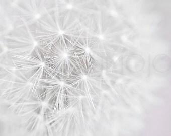 Floral dandelion Photography dots spring cottage hope star burst seeds bright white flora garden flower - Transitions - fine art photo