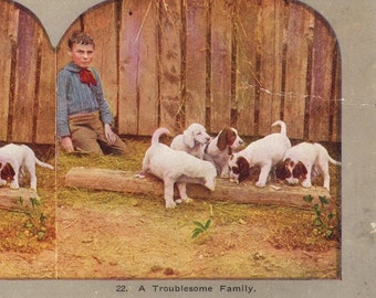 Boy and his puppies Antique stereo view card family of dogs