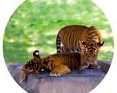 Kids Wall Decor, Tiger Cubs, Decal, Sumatran Tiger Conservation, Nursery Art, Orange, Black, Stripe - Double Trouble