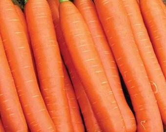 Organic Nantes Carrot Seeds