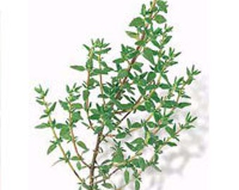 English Thyme Seeds - Untreated and Non-GMO