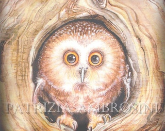OWLY -- ACEO PRINT  collectible card  owl -wood- owl art -fine art-
