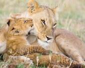 Animal Nursery, BABY LION...