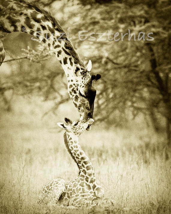 Baby Giraffe And Mother Photo Vintage Sepia Print Mom And
